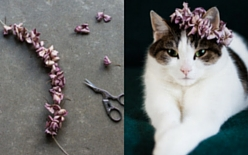 Why not make a flower crown for your favourite feline. All you need are a needle, a thread, and some petals.