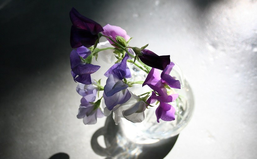 Sweet pea love