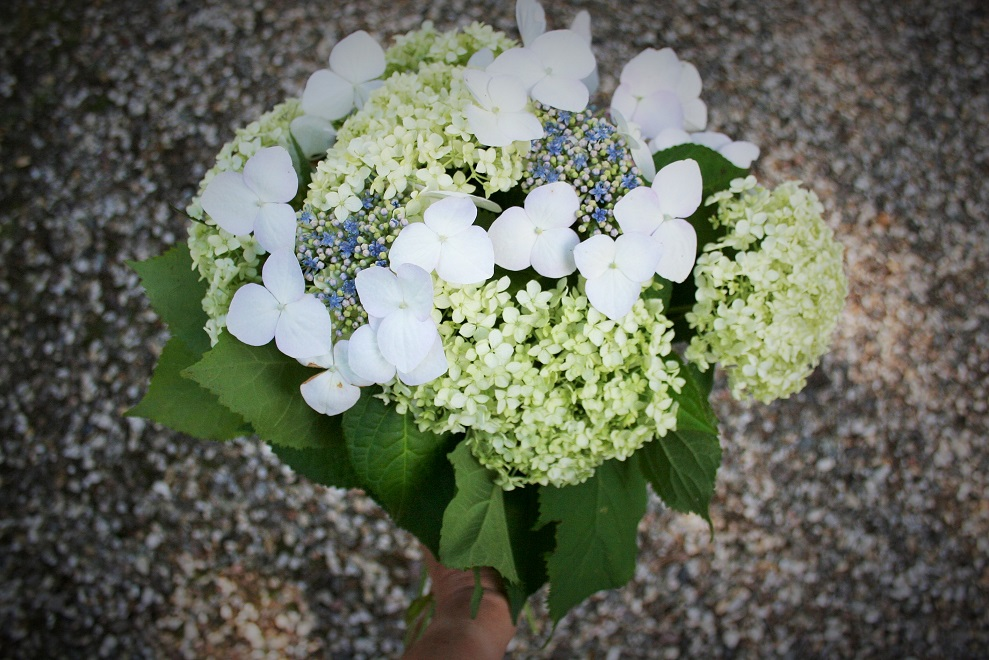 Hydrangea bouquet with white flowers