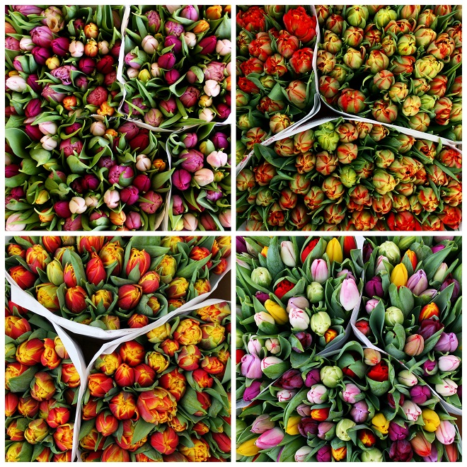 Multi colored tulips on a flowermarket in Holland