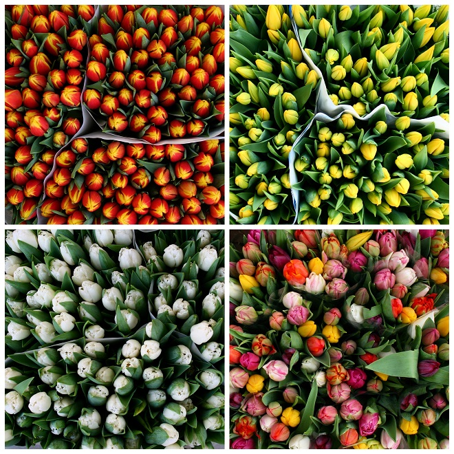Orange-white-yellow-tulips-flowermarket