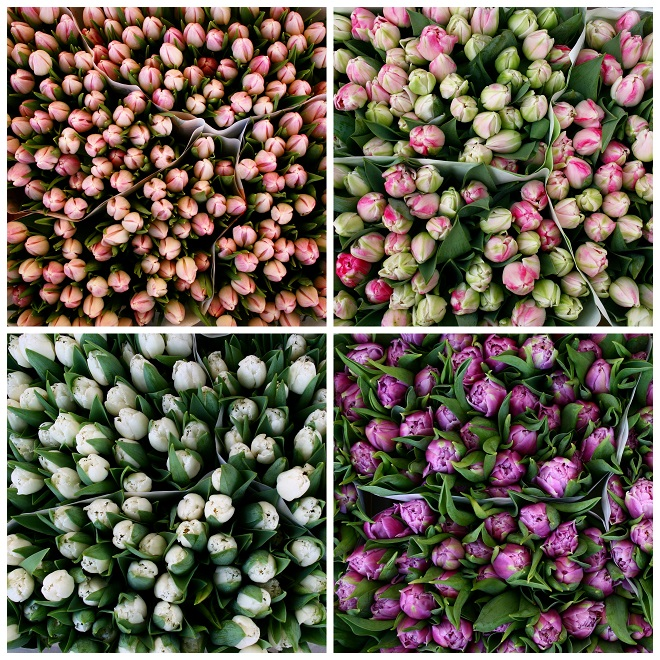 Pink white purple tulips on a flowermarket in Holland