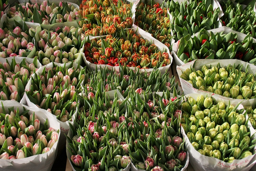 Tulips at a flowermarket in Holland