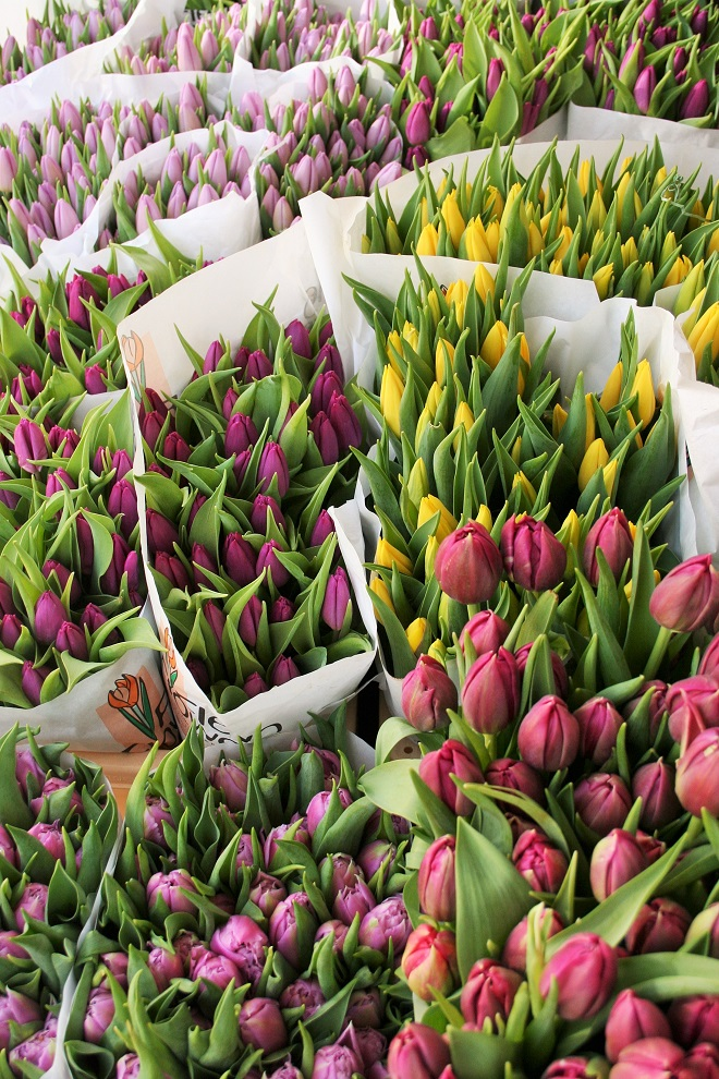 Tulips at the flower market - Cloverhome.nl