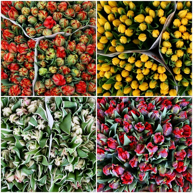 Colorful-tulips-flowermarket-Holland