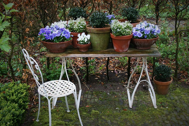 Blue and white pansies on garden table - Cloverhome.nl