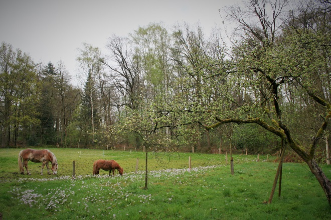 A meadow with two horses