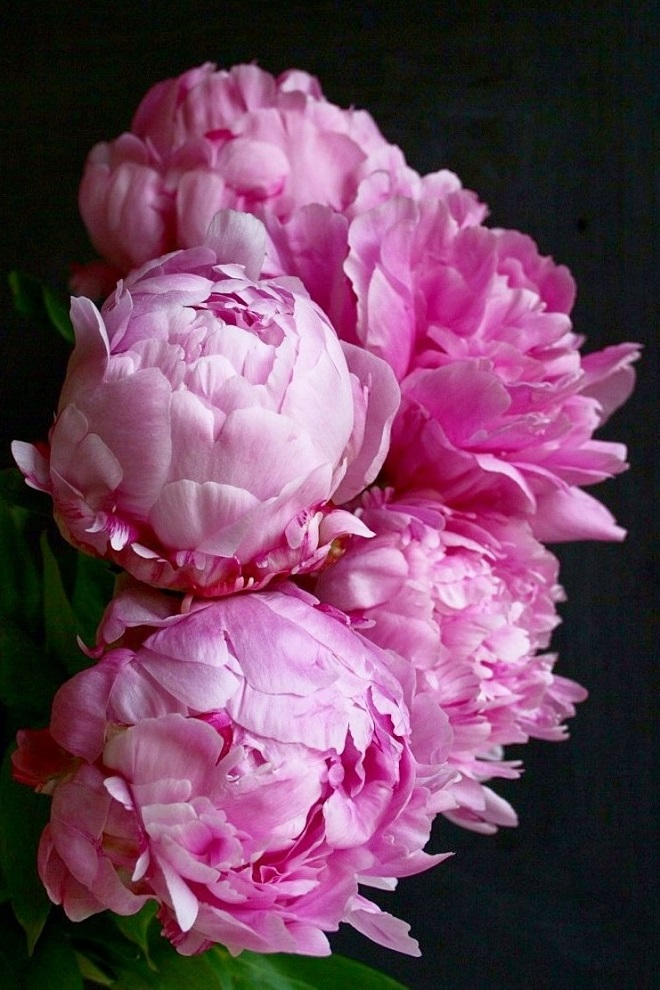 The language of flowers: peonies - Cloverhome.nl