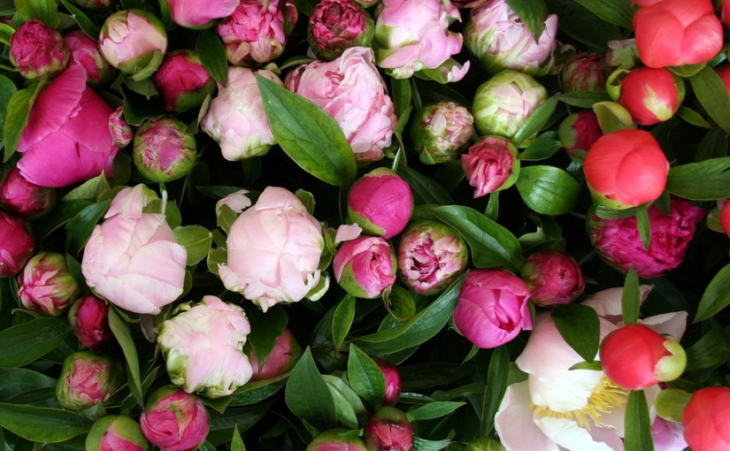 The flower market in May: buying seasonal flowers