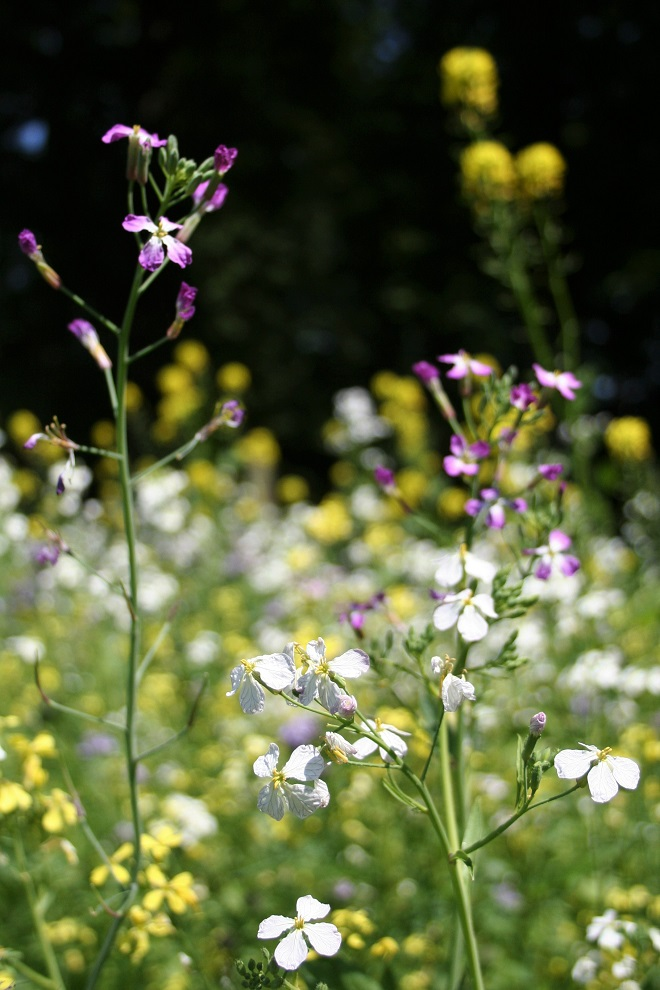 How to Herbarium: wildflowers - Cloverhome.nl