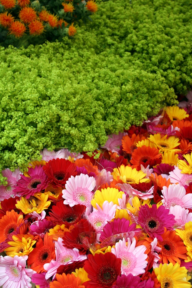 Market days June: summer flowers, gerbera - Cloverhome.nl