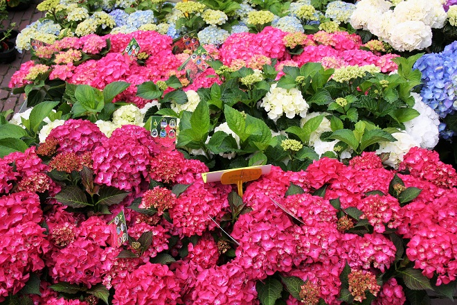 Market days June: summer flowers, hydrangea - Cloverhome.nl