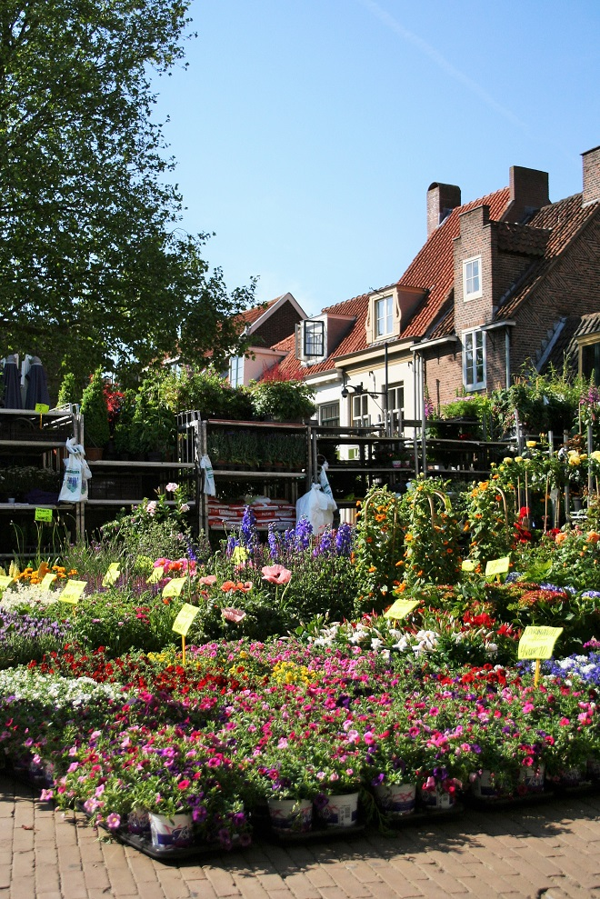 Market days June: summer flowers, market square - Cloverhome.nl