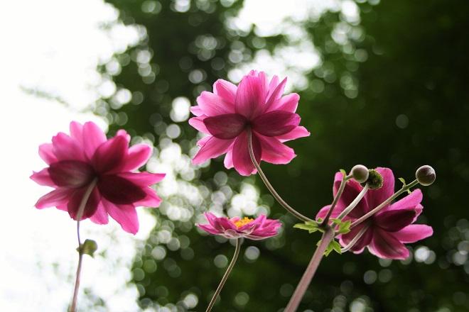 Garden photography: Piet Oudolf garden - Cloverhome.nl
