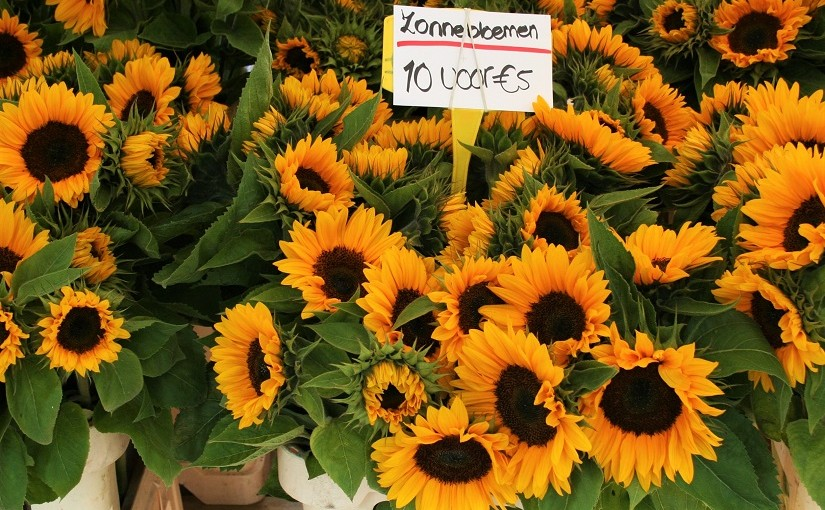 Hold on to summer with sunflowers: market days August