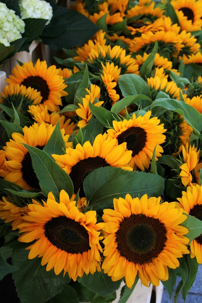 Hold-on-to-summer-sunflowers-5-cloverhome