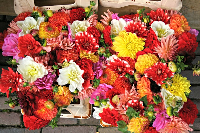 Bring the season into your home with Autumn flowers - Cloverhome.nl
