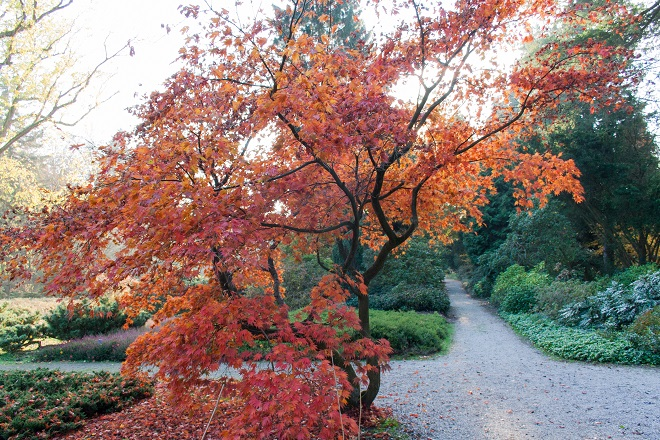 Enjoy autumn colours at the arboretum - Cloverhome.nl