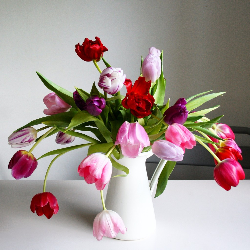 Best flowers for Valentine's Day besides roses: tulips - Cloverhome.nl