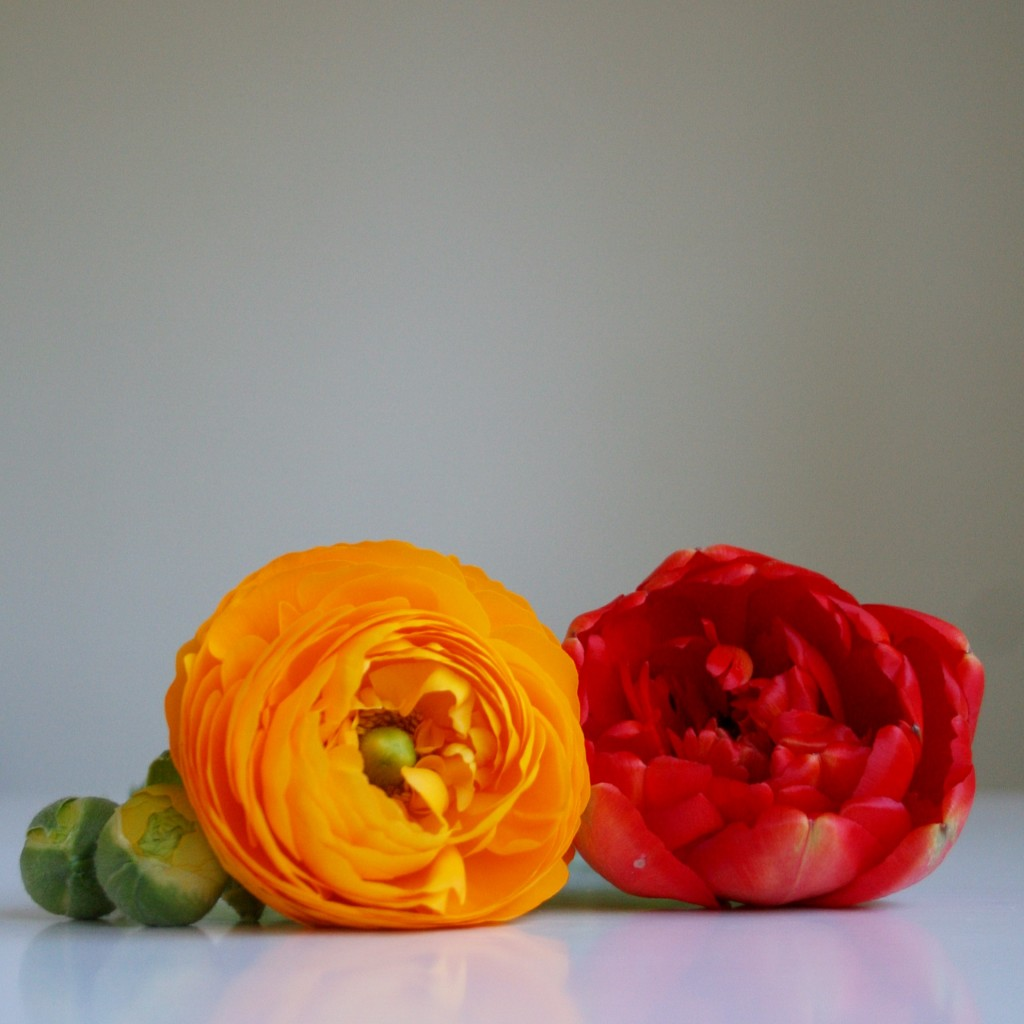 Best flowers for Valentine's Day besides roses: tulips and ranunculus - Cloverhome.nl