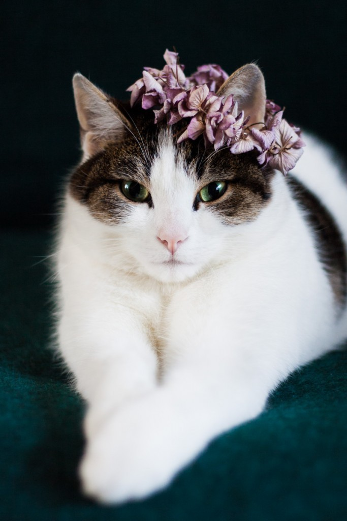Why not make a flower crown for you favourite feline. All you need are a needle, a thread and some petals.