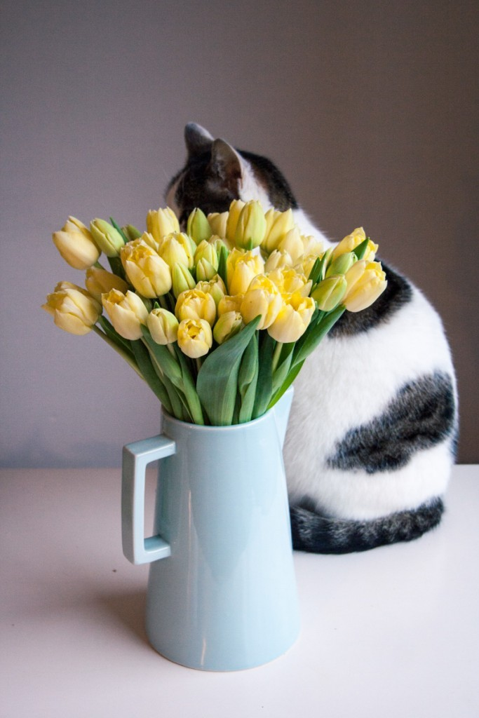 Naughty cat on the kitchen table hides behind a bouquet of tulips.