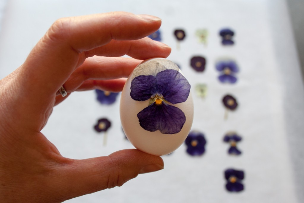 Diy Pressed Flower Easter Eggs Cloverhome