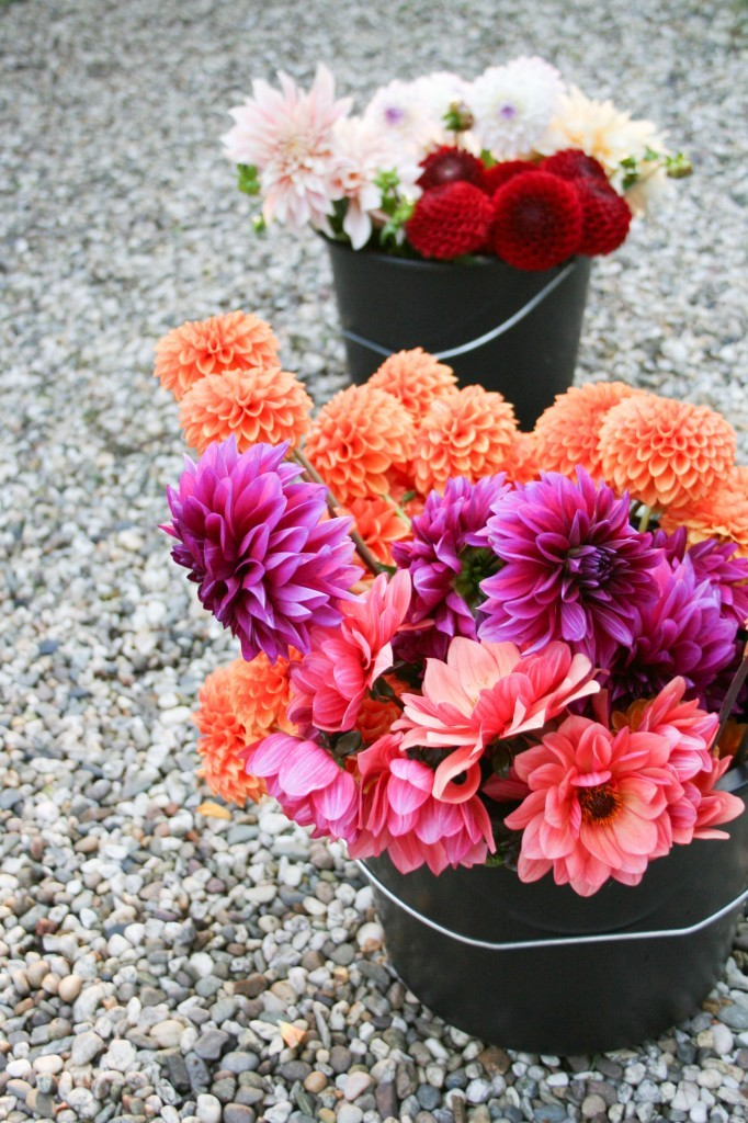 5 reasons to grow your own flowers: dahlias - Cloverhome.nl