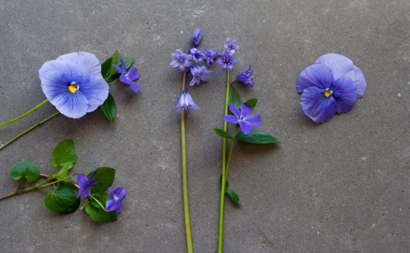 What's blooming in the garden in May: pansies, violas, bluebells, periwinkle - Cloverhome.nl