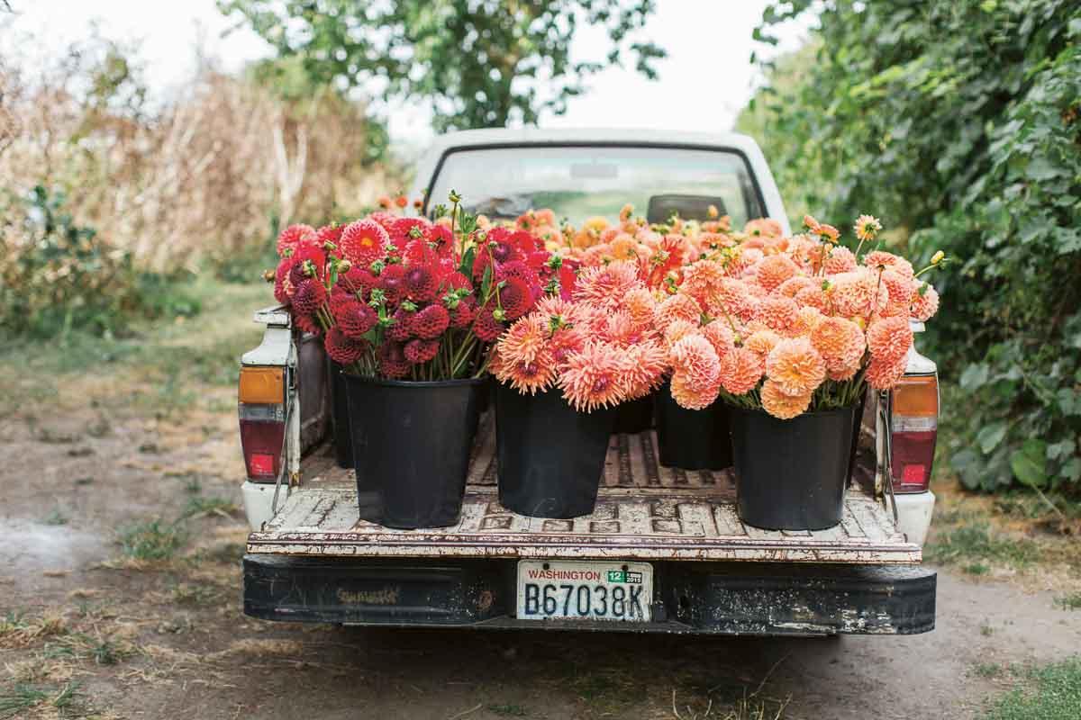 book review: cut flower garden by erin benzakein - cloverhome