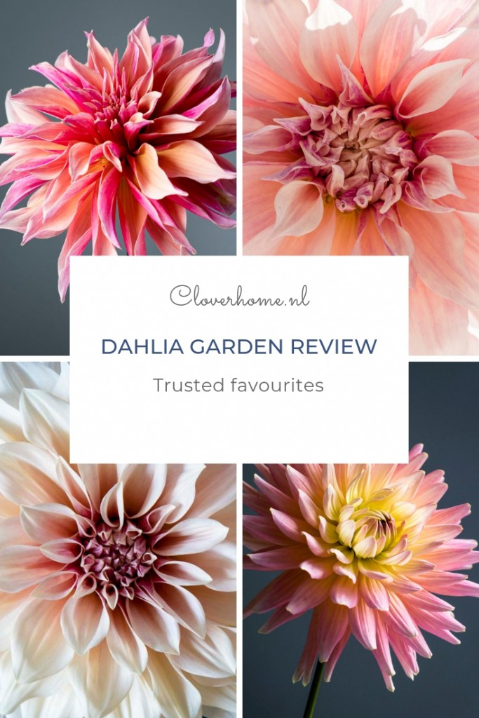 While waiting for the start of the dahlia season, I thought it would be a good idea to share my trusted favourite dahlia varieties - Cloverhome.nl