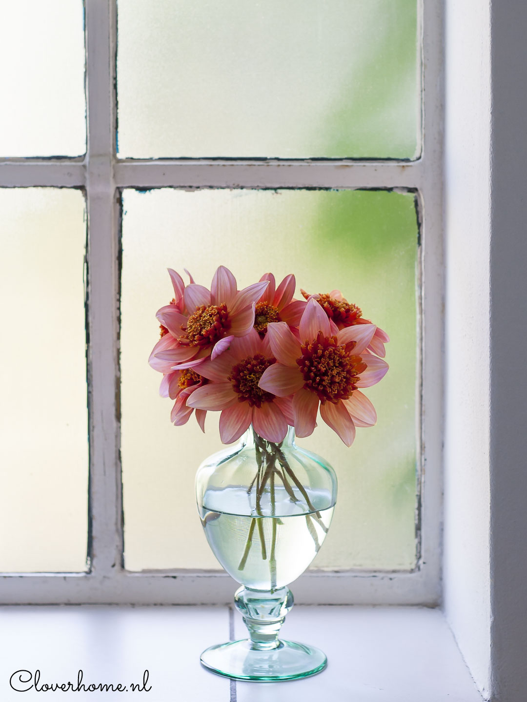 Dahlia garden review, trusted favourites: Totally Tangerine - Cloverhome.nl