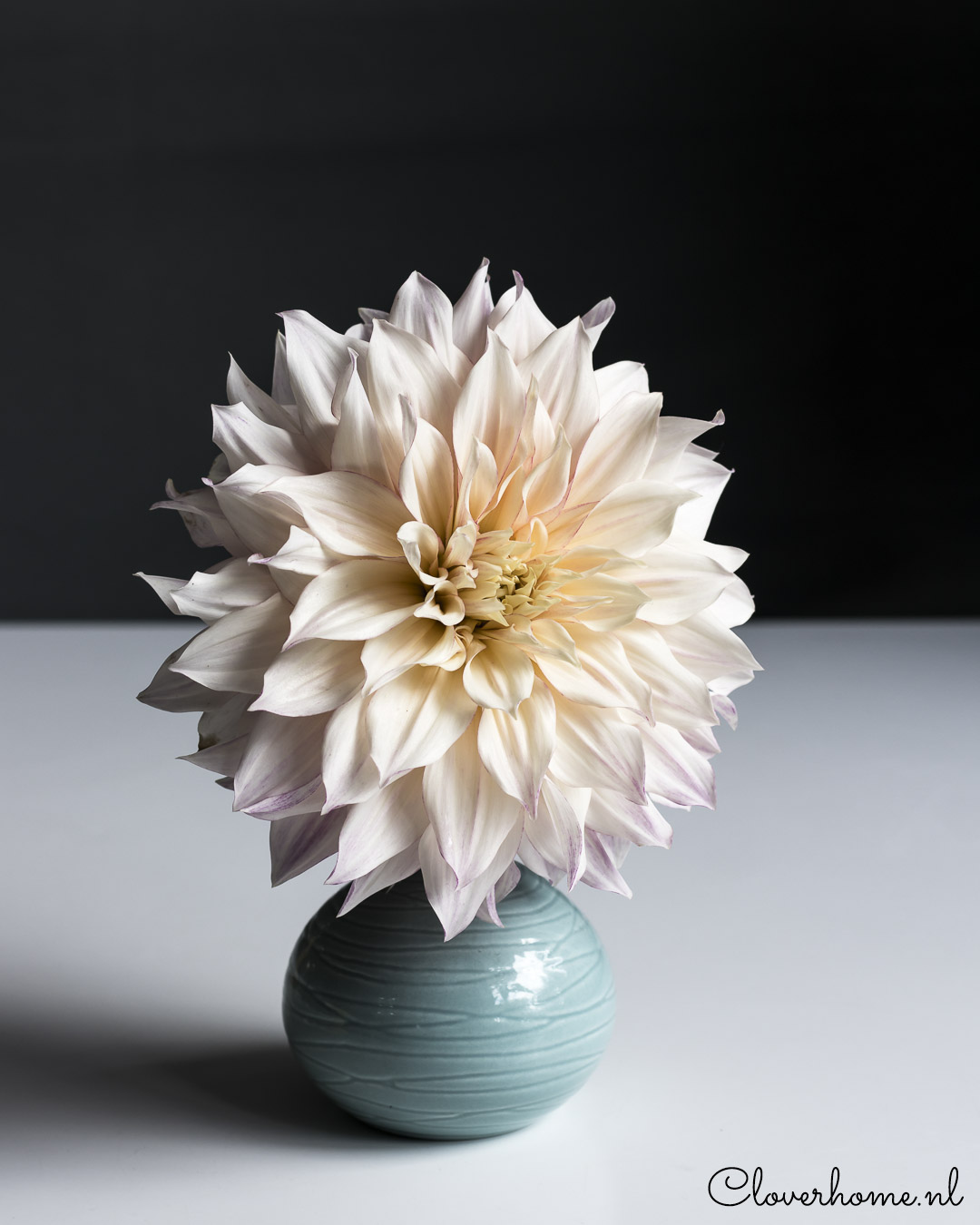 Dahlia garden review, trusted favourites: Café au Lait - Cloverhome.nl