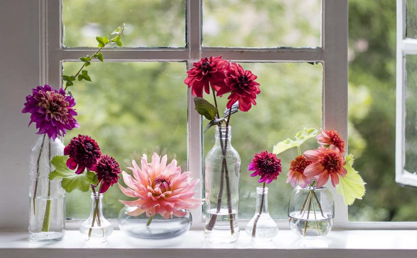 Dahlia garden review: trusted favourites