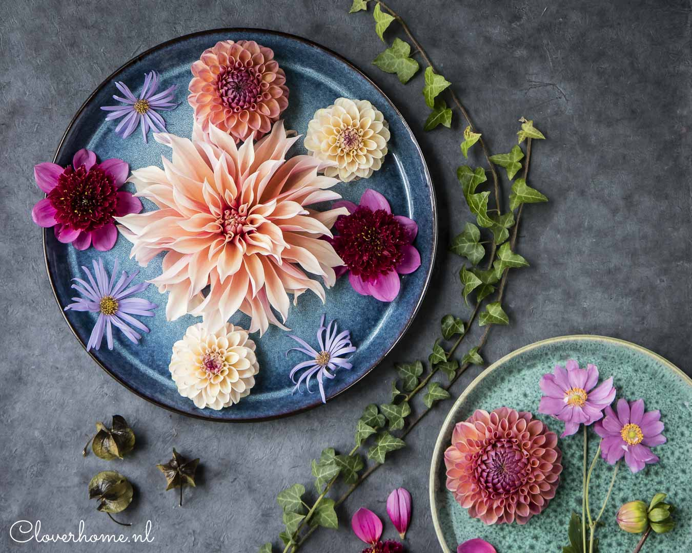 Dahlia garden review, trusted favourites: Labyrinth - Cloverhome.nl