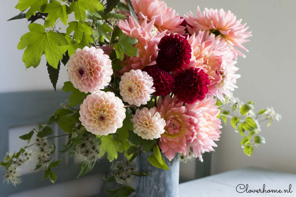 While waiting for the start of the dahlia season, I like to present a few new favourite dahlia varieties - Cloverhome.nl