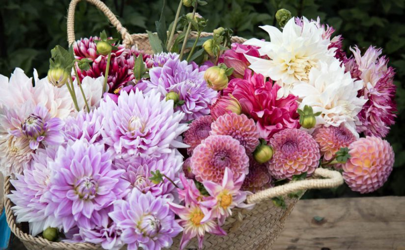 A family flower farm: spreading the love for flowers